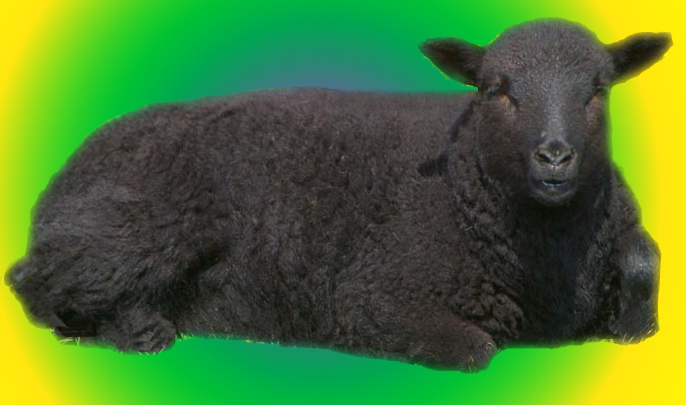 figuratively a black sheep